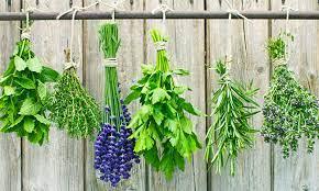 5 piante medicinali che ti aiutano con gli ormoni