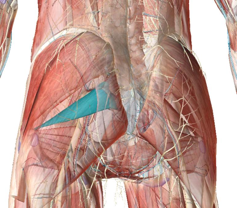 Sindrome del piriforme: è la causa del tuo mal di schiena?