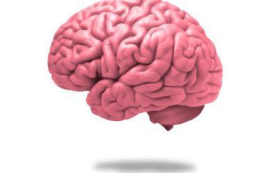 Cervello: 7 cibi che gli fanno male